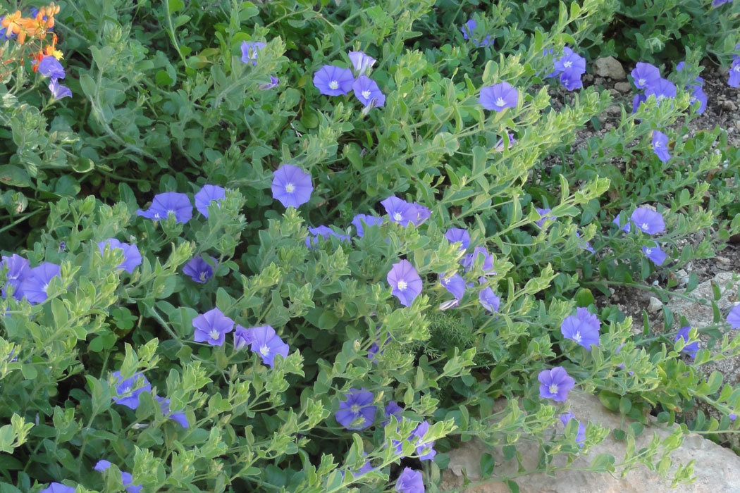 Mediterran, Garten, blau