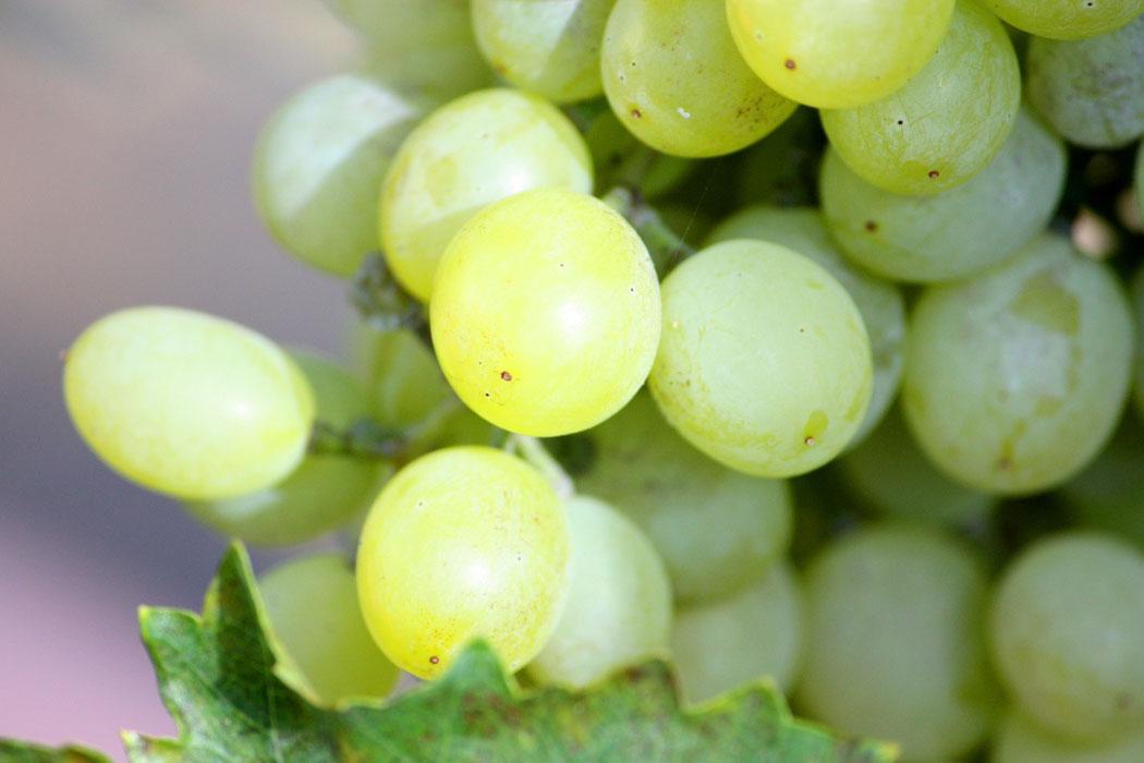 Weisswein im Sommer auf Mallorca
