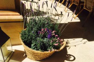 Provence meets Mallorca
