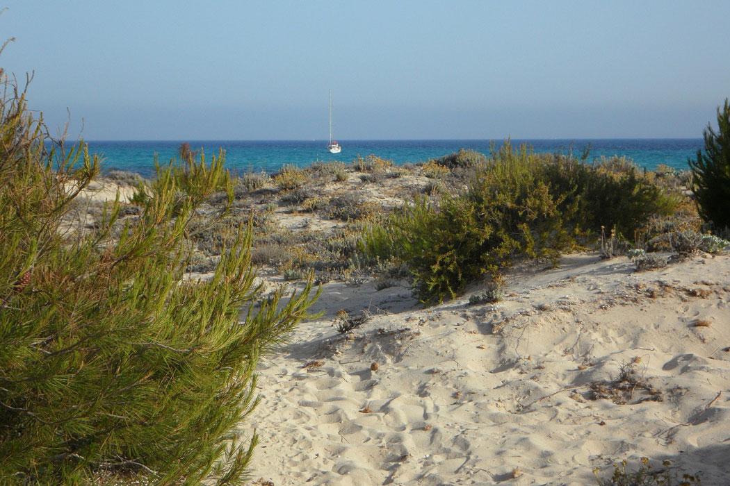 Bus zum Naturstrand Es Trenc auf Mallorca