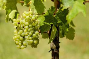 Mallorca Wein
