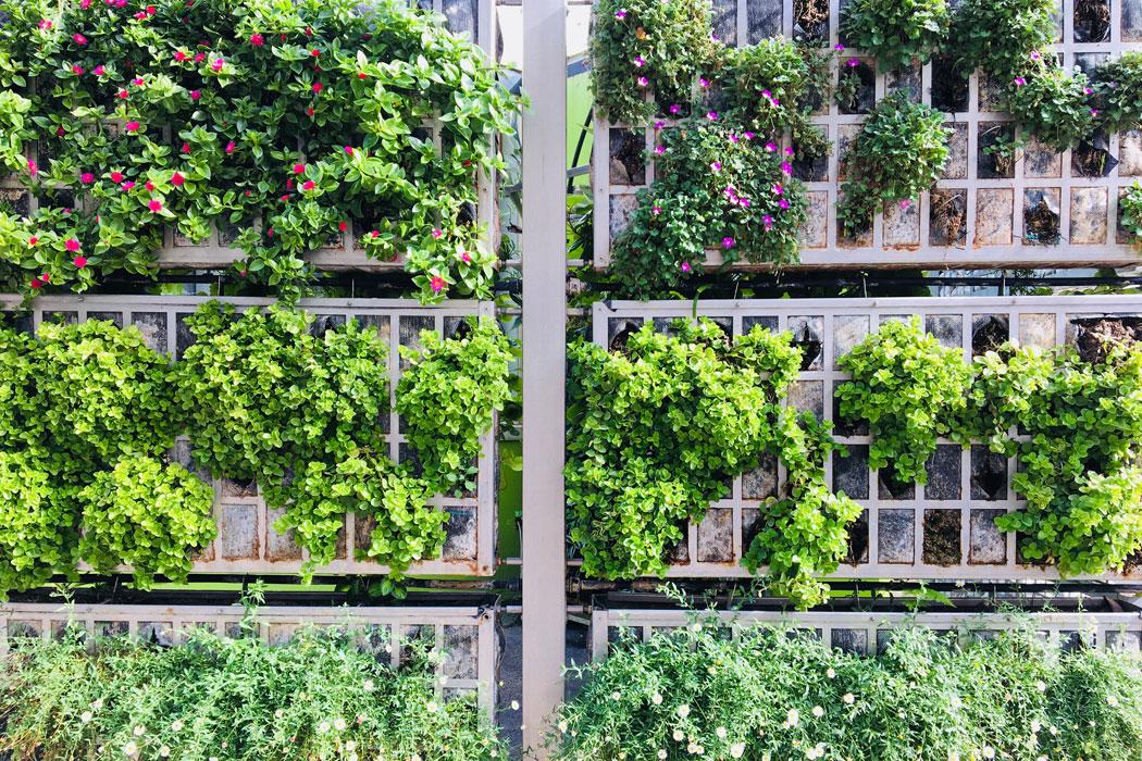 Gärten in Palma auf Mallorca