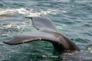 Wal auf Mallorca
