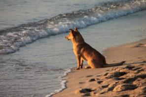 Neuer Hundestrand auf Mallorca