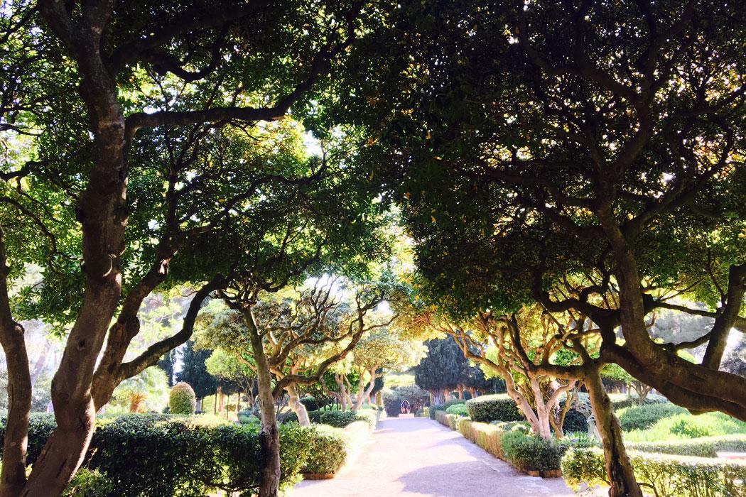 Palmas grüne Parks