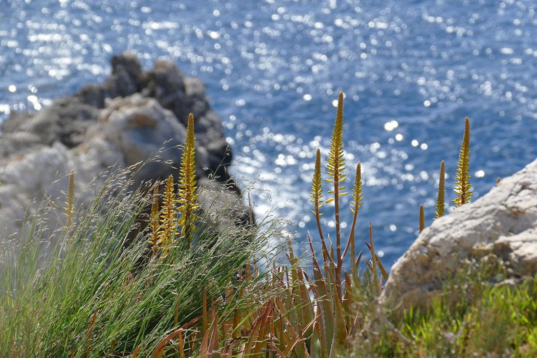 Öko-Steuer Mallorca